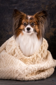 A little dog basks in a large knit sweater