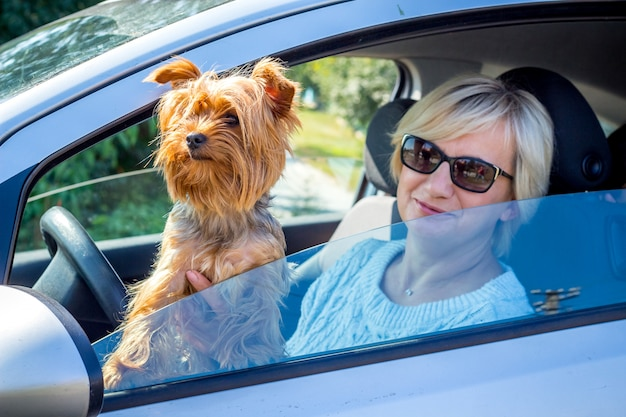 Little dog of breed yorkshire terrier with his mistress in the car window