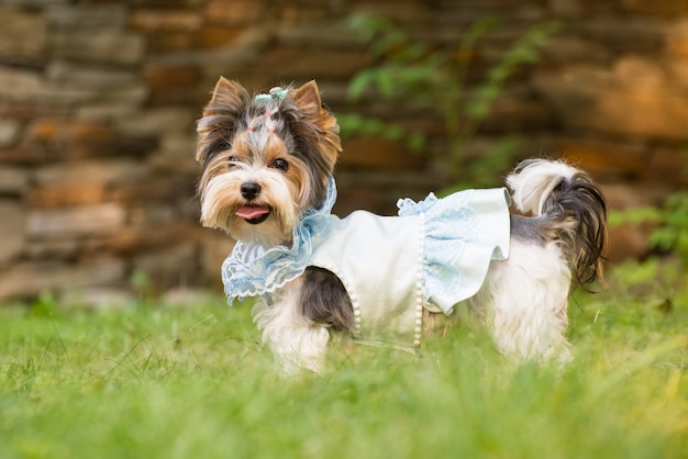 Little dog in clothes