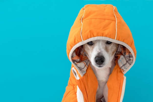 Little dog in coat with hood