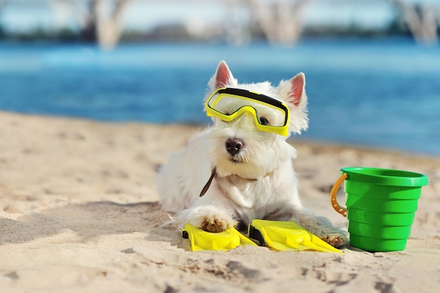 Little dog diver having rest at the sandy beach