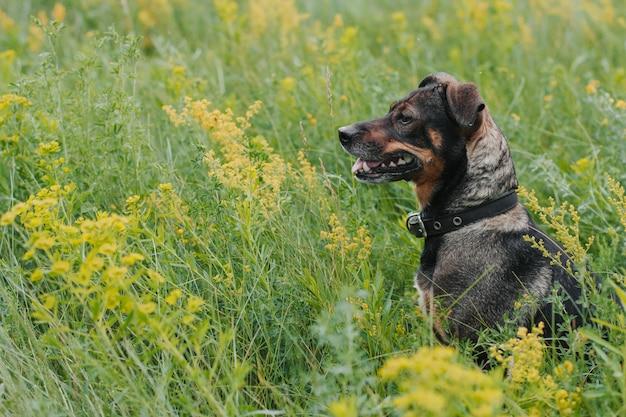 Little dog in the flowered field. wild flowers. black dog