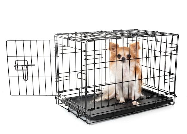 Маленькая собака в клетке
