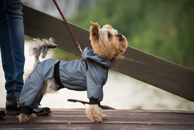 산책 옷에 작은 개
