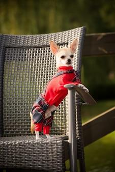 Маленькая собака в одежде на прогулку.