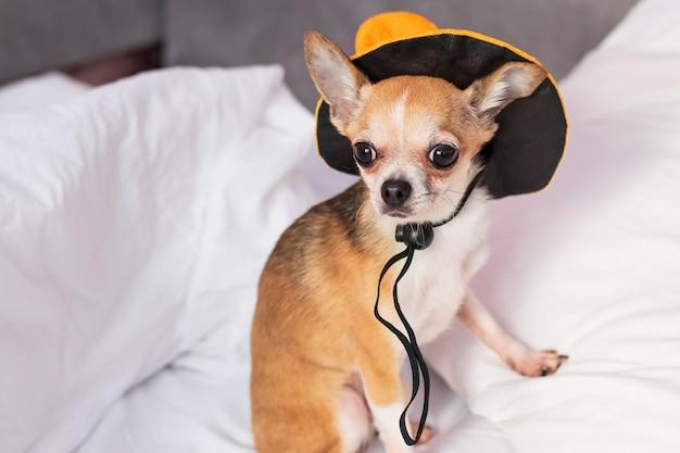 Маленькая собака на белых постельных принадлежностях сидит в шляпе на хэллоуин