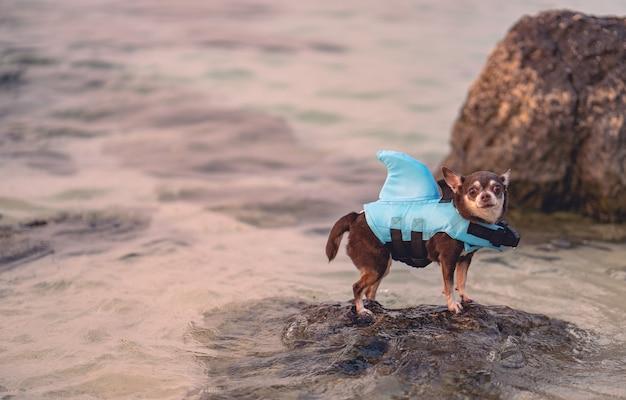안전한 수영을 위해 상어 모양의 수영복을 입고 바다에 서 있는 작은 개.