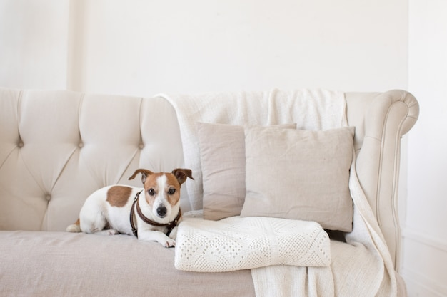 Little doggy on the couch