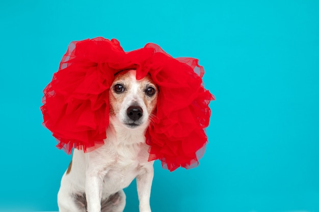 Little domestic dog in red wig sitting and looking at camera
