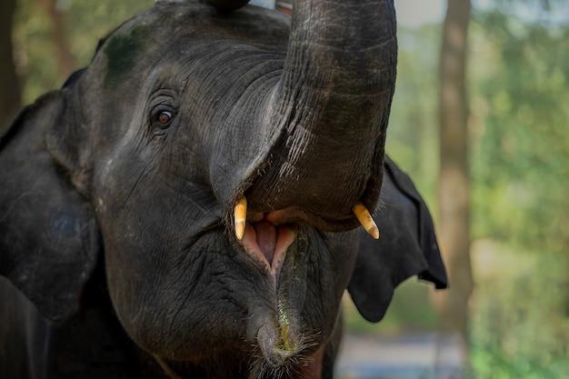 작은 코끼리는 풀을 먹고 즐거워하기 위해 코끼리를 안았습니다.