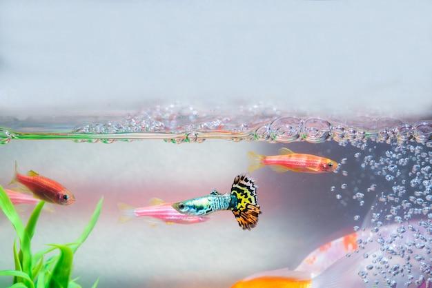 Little fish in fish tank or aquarium