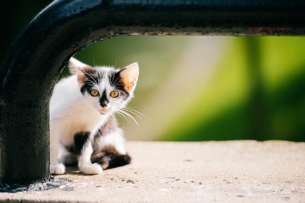 市橋で道端に座って周りを見回す小さな脂肪質の都市ホームレス子猫。毛皮で浮気なかわいい猫のアウトドア。家と食べ物を探している空腹の家畜を失った。