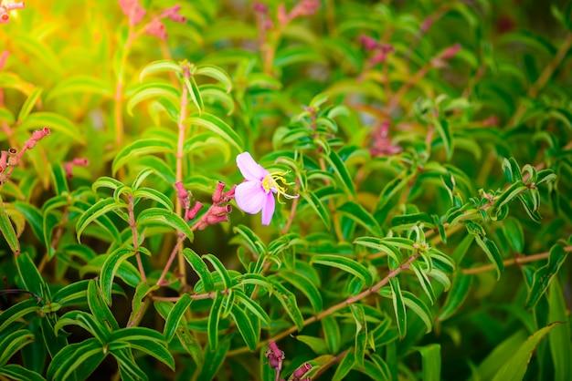 Little flower in phu hin rong kla national park, phitsanulok province