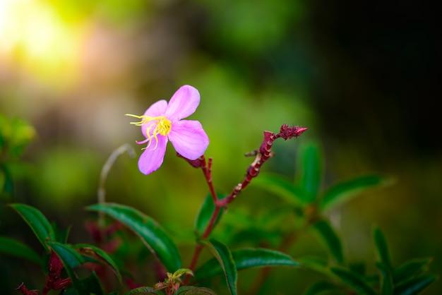 Little flower in phu hin rong kla national park