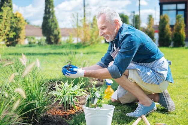 Little flowers. bearded man wearing white gloves and striped apron transplanting little green flowers outside his house