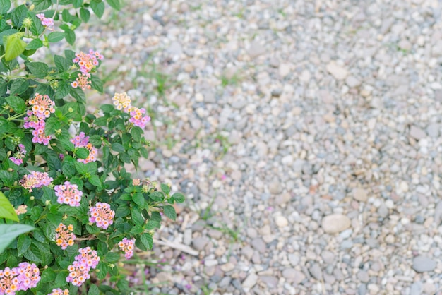 Little flowers with pebble path walkway  as background.