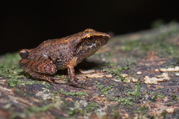 苔でいっぱいの乾燥した木に腰掛けて小さなカエル