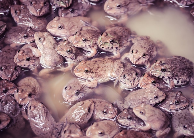 The little frogs family in the farm. close up and selective focus.