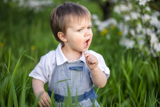 Little funny boy in a fashionable blue overalls with expressive blue eyes. cute smiles and eats fresh green grass in a large flowering garden in the tall grass.