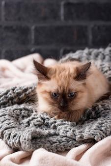 Little funny kitten on knitted plaid