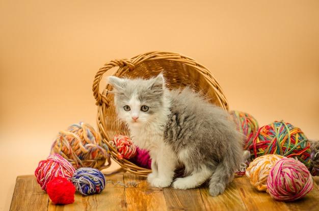 뜨개질 공 작은 재미 있은 새끼 고양이.