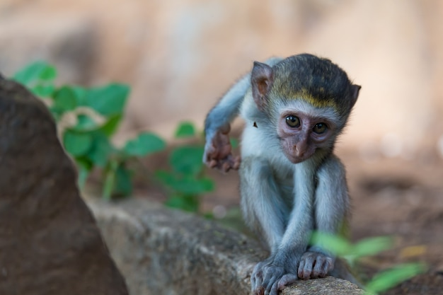 Little funny monkey is playing in a tree