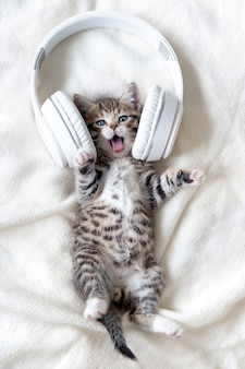 Little funny striped cat kitten singing song in headphones on white bed. kitty with open mouth