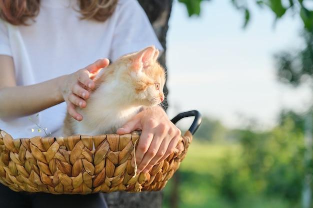 Маленький рыжий котенок, сидя в корзине, на руках маленькой девочки. природа в саду, солнечный весенний летний день, деревенский стиль, копия пространства