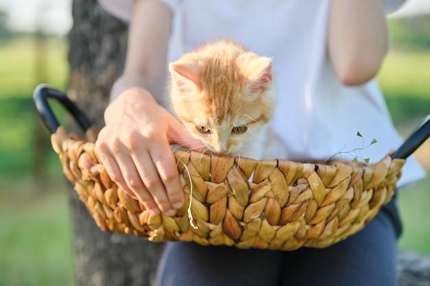Рыжий котенок сидит в корзине на руках маленького ребенка