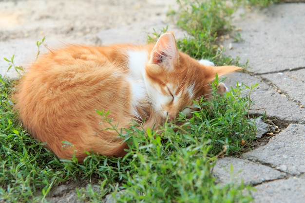 Little ginger kitty is sleeping in islet of grass on a stone patio