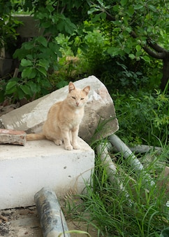 Little ginger outdoor kitten sitting on a obsolete blocks portrait of lonely red striped street cat with hard fate and scratches on muzzle beautiful red haired young kitten sits