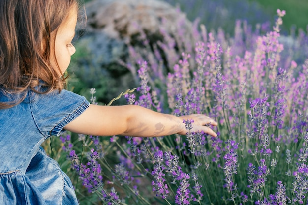 Little girl 3-4 with dark hair in denim dress in sun among large bushes of lilac lavender touching flowers with her hand