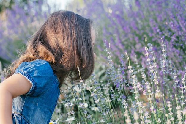 Little girl 3-4 with dark hair in denim dress in sun, sniffs large bush of lilac lavender