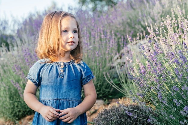 Little girl 3-4 with dark hair in denim dress in sun stands, among large bushes of lilac lavender