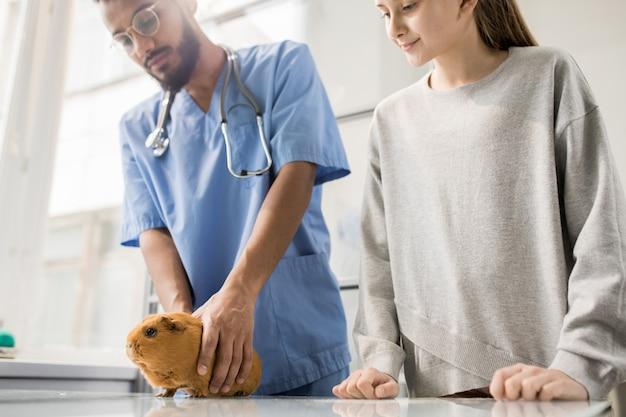 クリニックへの訪問中にテーブルの上の茶色のモルモットを見て制服を着た小さな女の子と若い専門獣医師