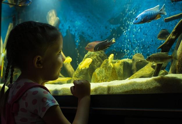 Little girl child looks at the fish in the aquarium