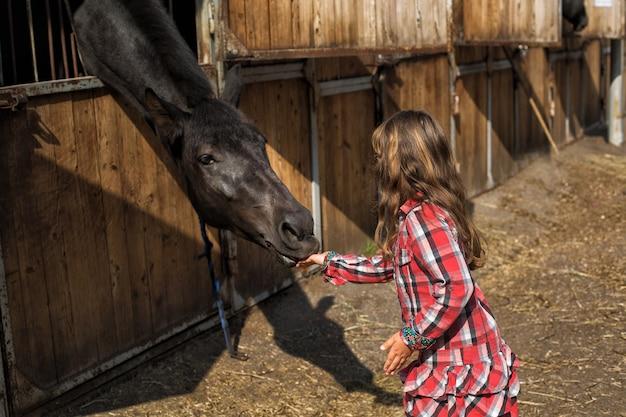 Маленькая девочка кормит черного коня
