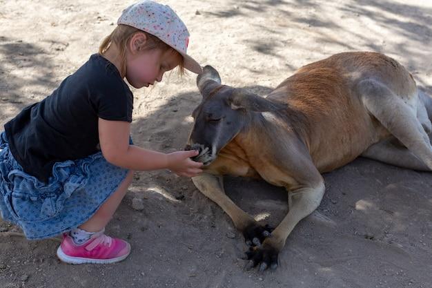 Маленькая девочка кормит австралийский кенгуру