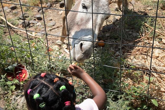 Little girl feeds donkey in zoo