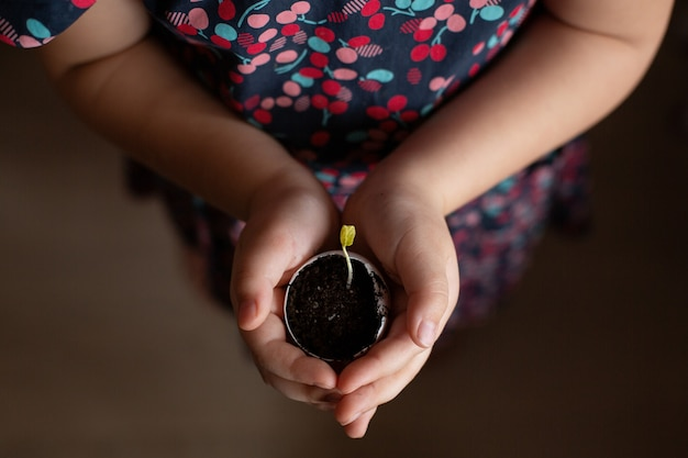 Little girl hands holding small plant growing in eggshell