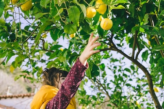 Little girl harvesting lemons