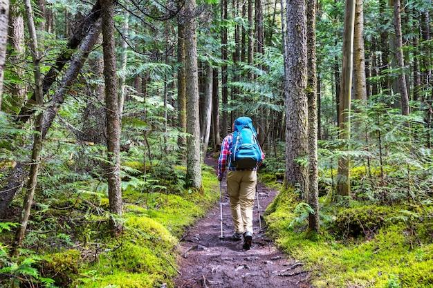 森の中の小道をハイキングする少女。