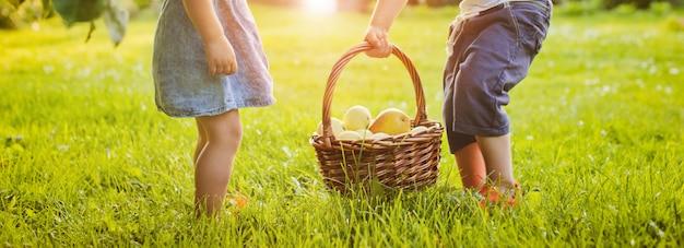 赤いリンゴとバスケットを持って小さな女の子 Premium写真