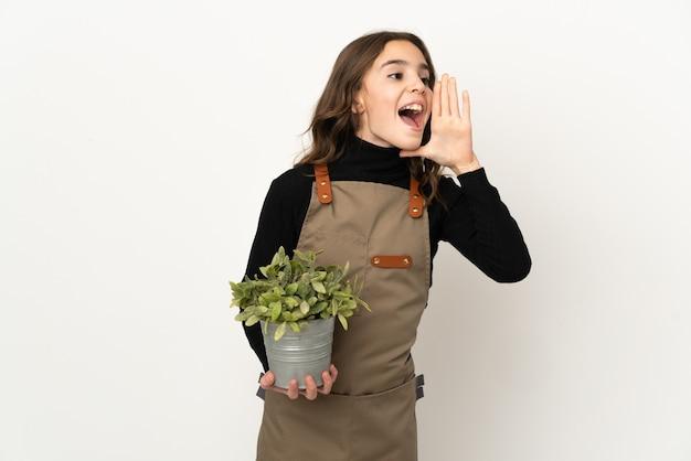 Маленькая девочка держит растение, изолированное на белом фоне, кричит с широко открытым ртом в сторону