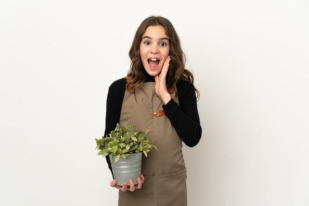 Маленькая девочка держит растение, изолированное на белой стене, с удивленным и шокированным выражением лица