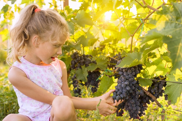 ブドウ、夕日を背景の束を保持している小さな女の子