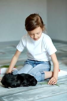 Little girl holding and feeding black guinea pig, domestic animal.