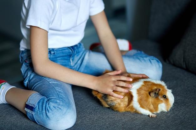 Маленькая девочка в маске играет с красной морской свинкой, cavy у себя дома на диване во время карантина.