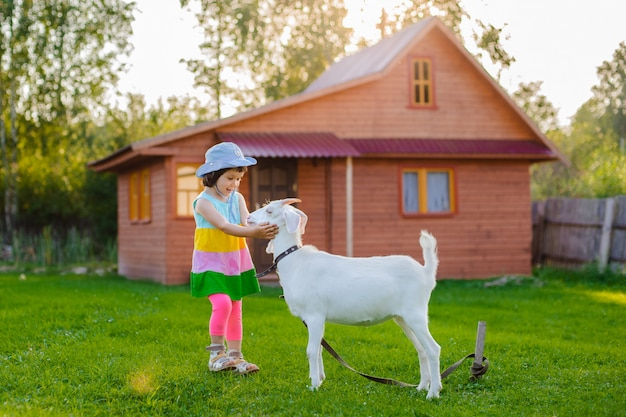 A little girl is feeding a goat on the lawn a sunny summer, in a country in russia.