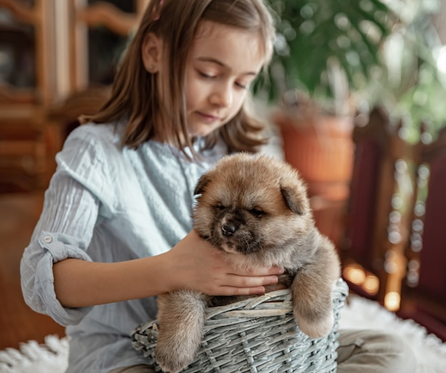 A little girl is playing with her little and fluffy puppy.